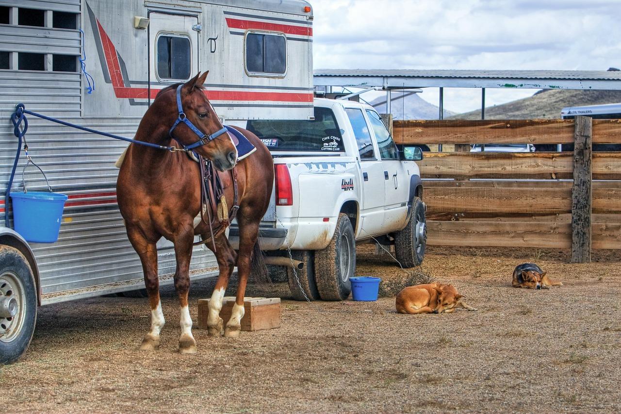 Hoe vind je de beste trailer voor je paard?