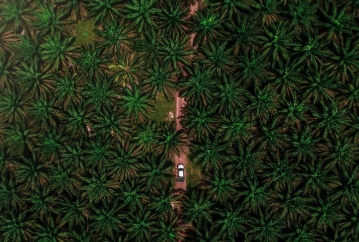 De toekomst van palmolie