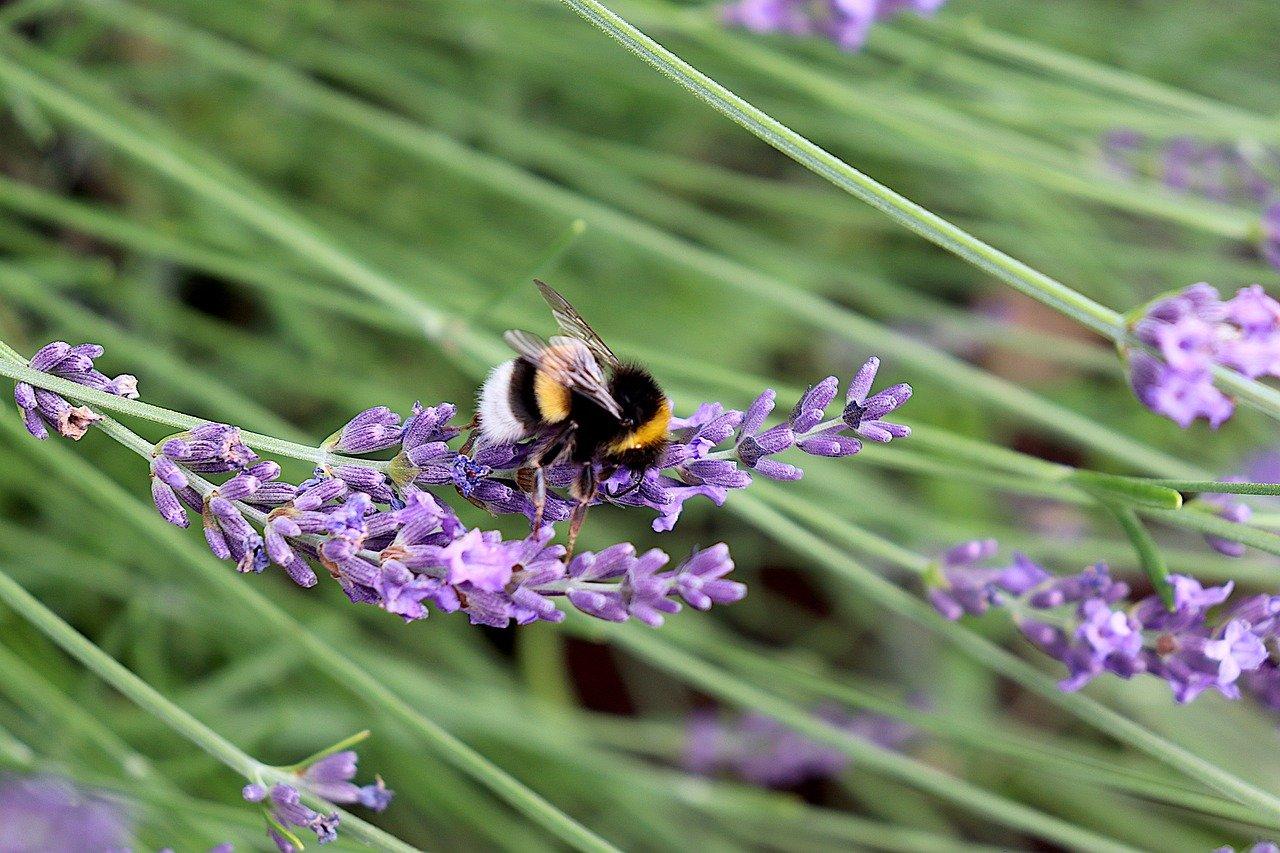 Last van larven in je tuin? dit kan het zijn